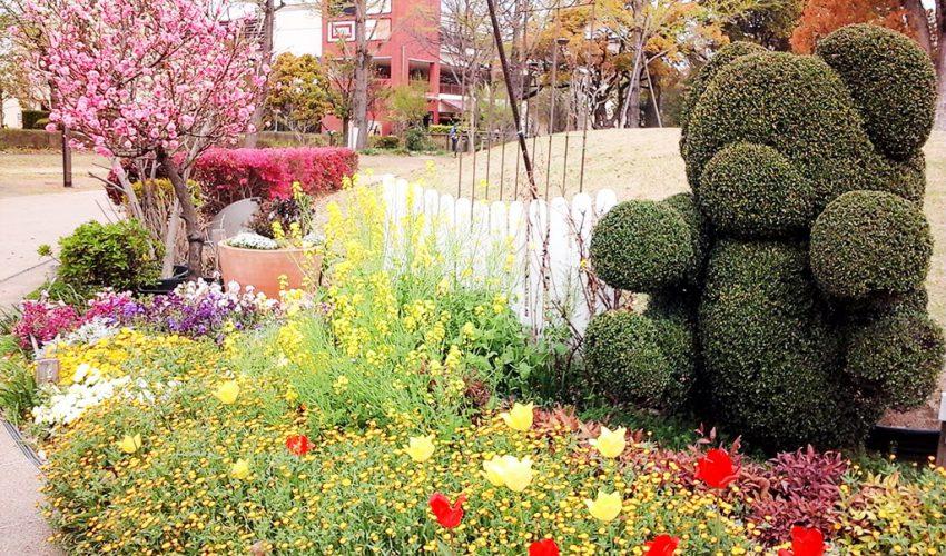 みらい公園に咲く花々